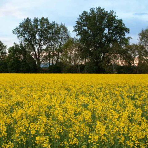 Viaggio nel giallo.